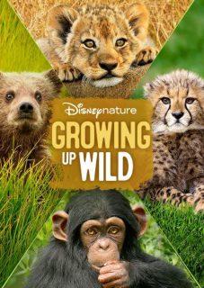 affiche poster grandir growing up wild disney nature