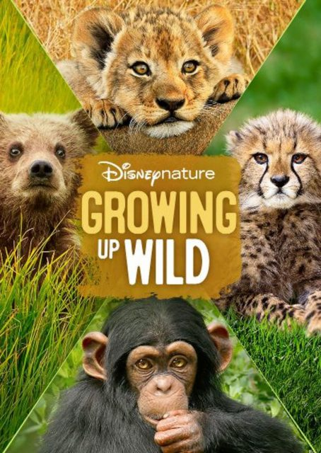 affiche poster grandir growing up wild disney nature