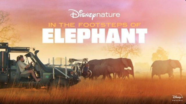 affiche poster route éléphants footstep disney nature plus