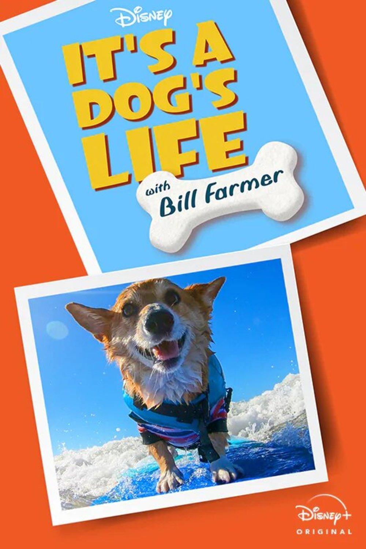 affiche poster héros fidèles bill farmer dog life disney