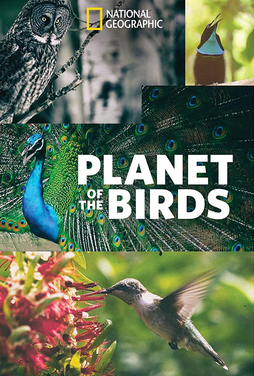 affiche poster planète oiseaux planet birds disney nat geo