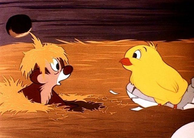 image drole poussin chicken rough tic tac chip dale disney