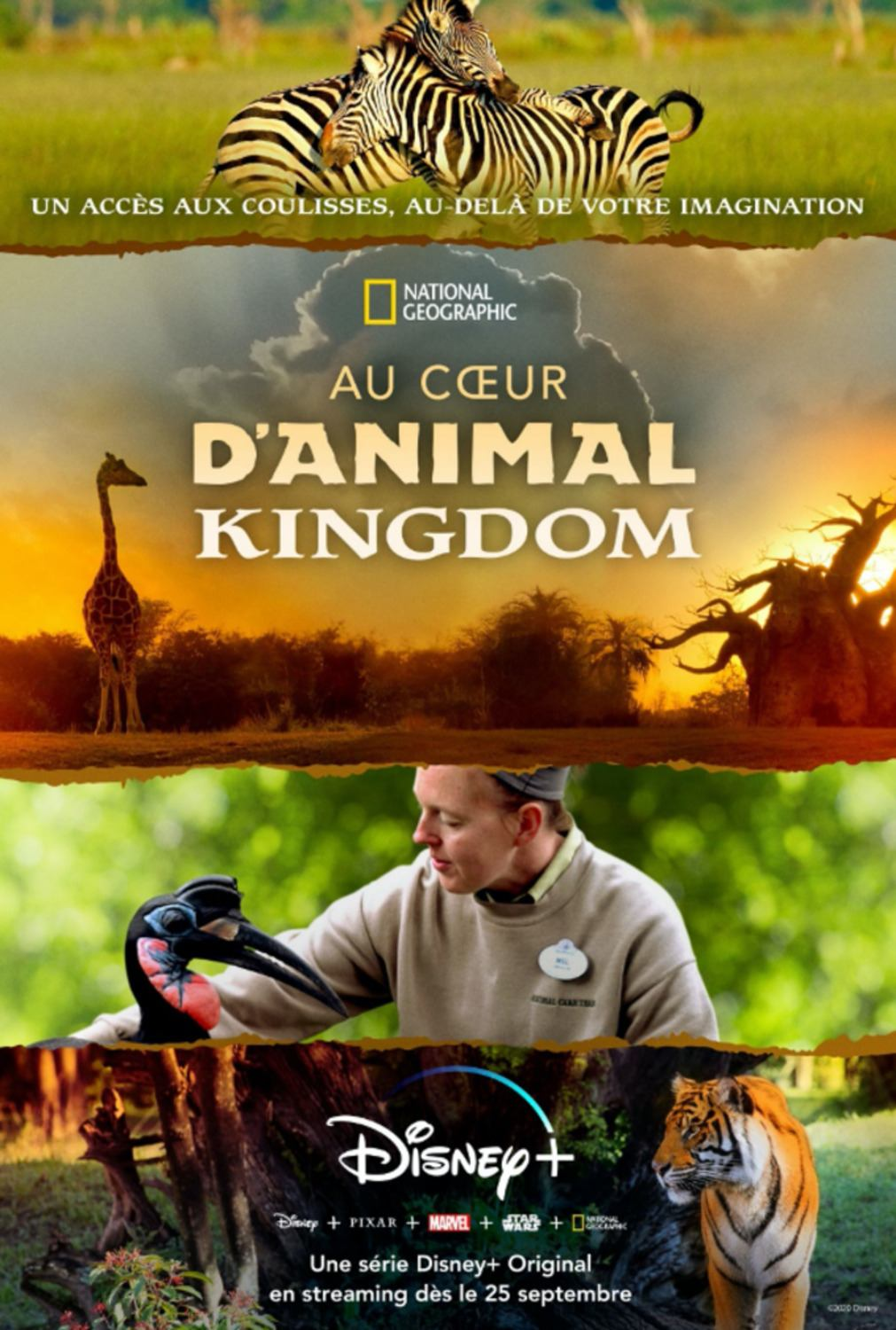 affiche poster animal kingdom disney magic coeur