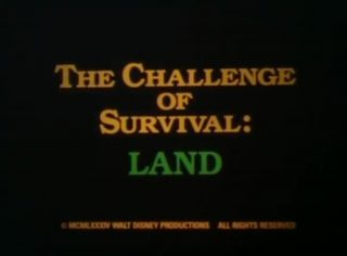 affiche poster challenge survival land disney
