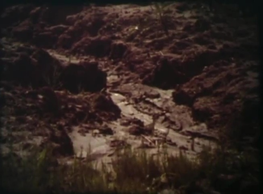 image challenge survival land disney