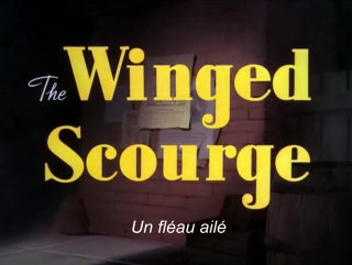 affiche poster fleau aile winged scourge disney