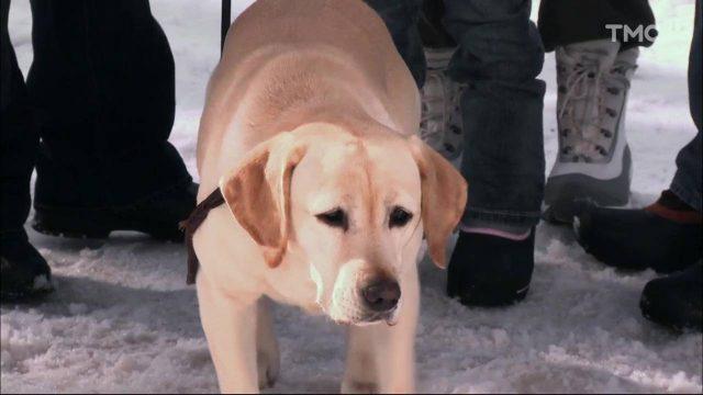 image chien noel 2 vacances ski christmas vacation dog saved disney