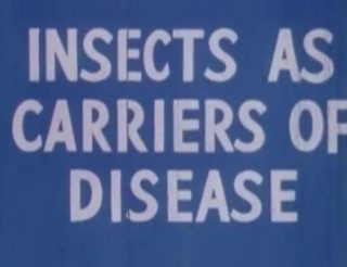 affiche poster insects carriers disease disney