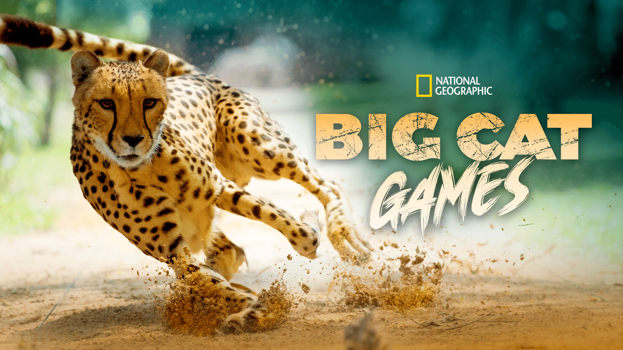 affiche poster big cat games nat geo disney