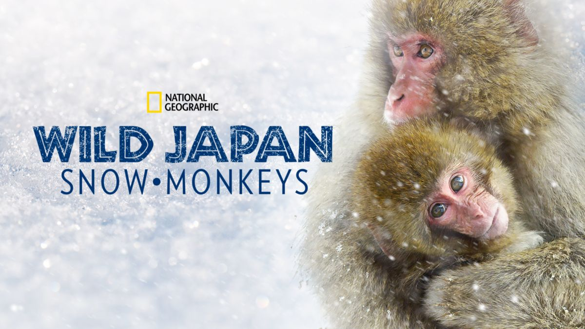 affiche poster destination wild macaques japonais japan snow monkeys disney nat geo