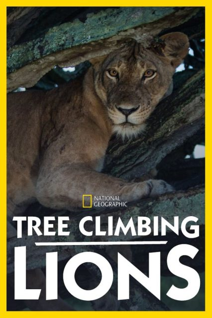 affiche poster lions arbres tree climbing disney nat geo