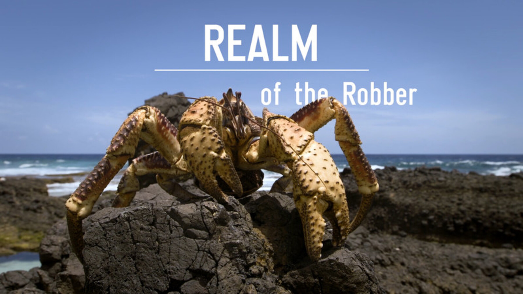 affiche poster realm robber christmas island disney nat geo