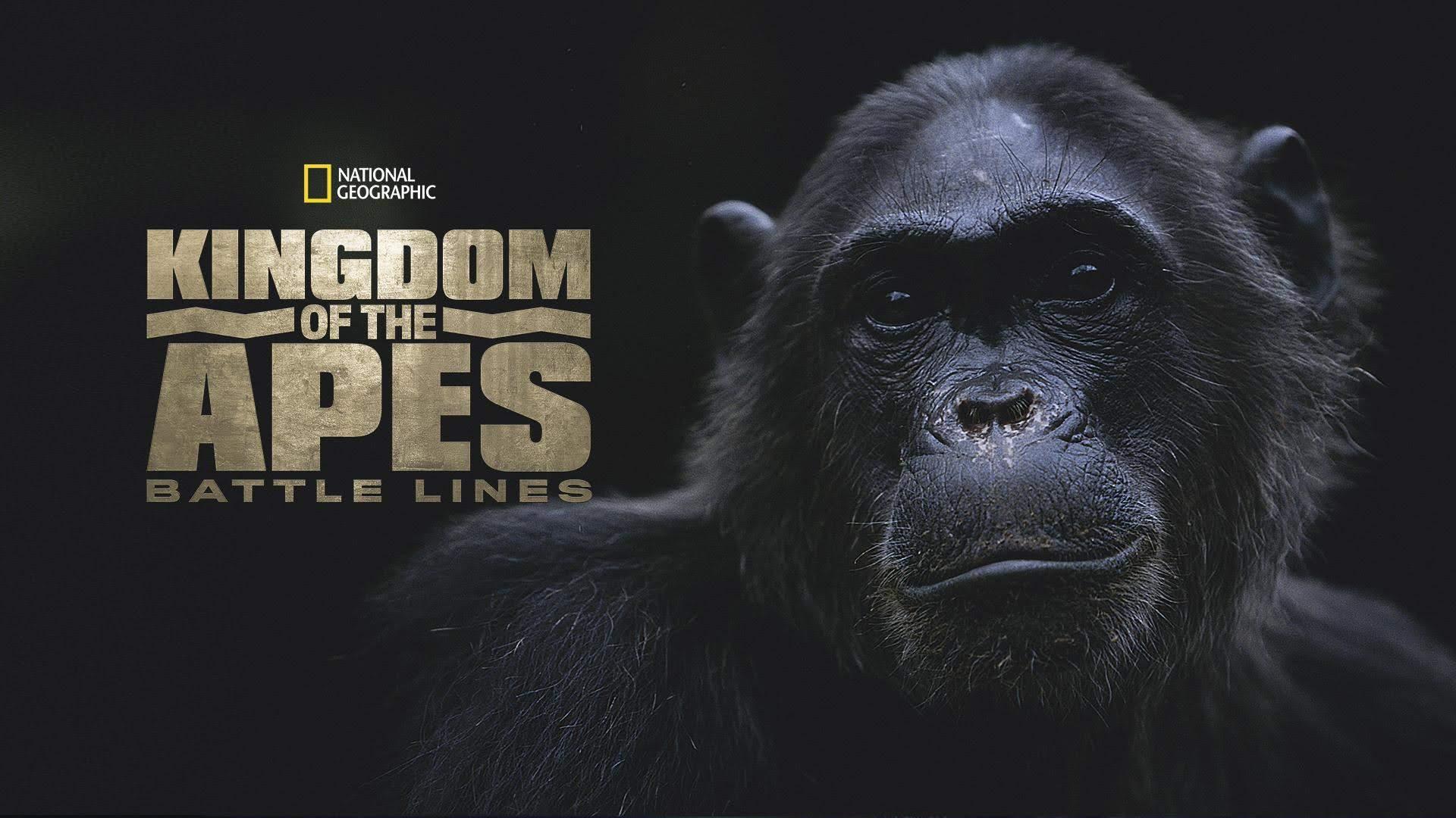 affiche poster royaume singes lignes bataille kingdom apes battle lines nat geo disney