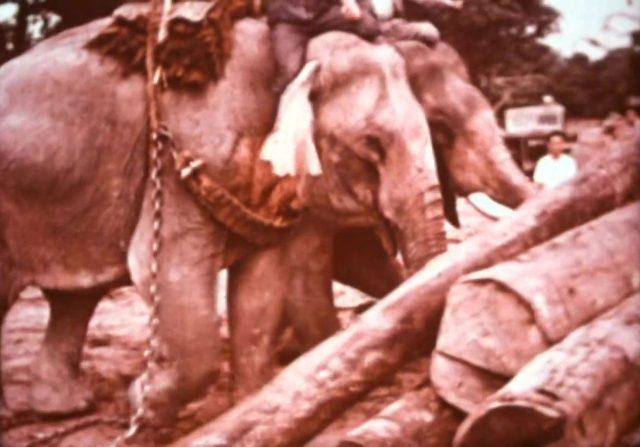 image nature things elephant disney