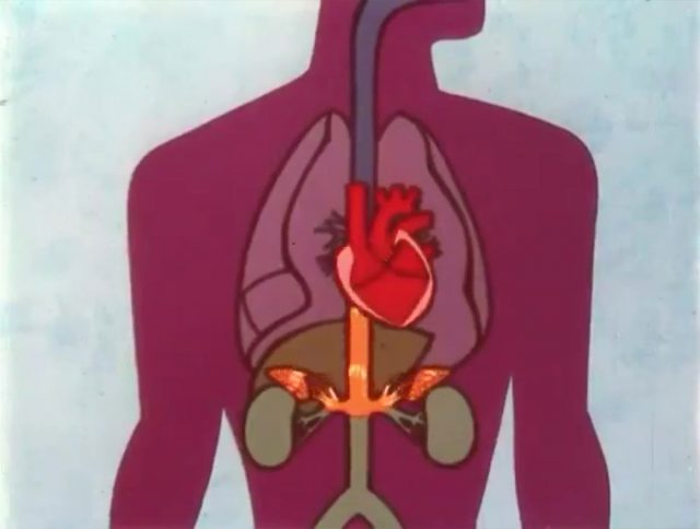 image understanding stresses strains disney