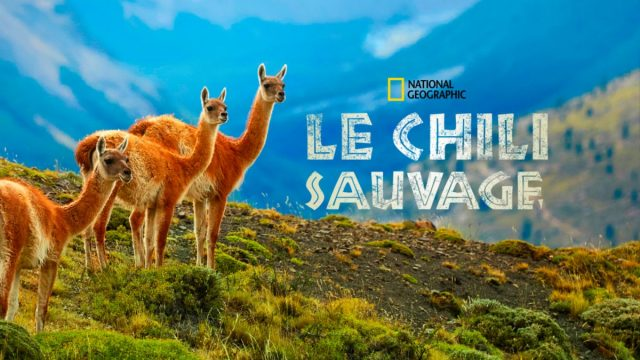 affiche poster destination wild chile chili sauvage disney nat geo