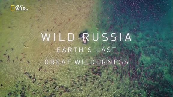 affiche poster destination russie Wild Russia earth last great wilderness disney nat geo