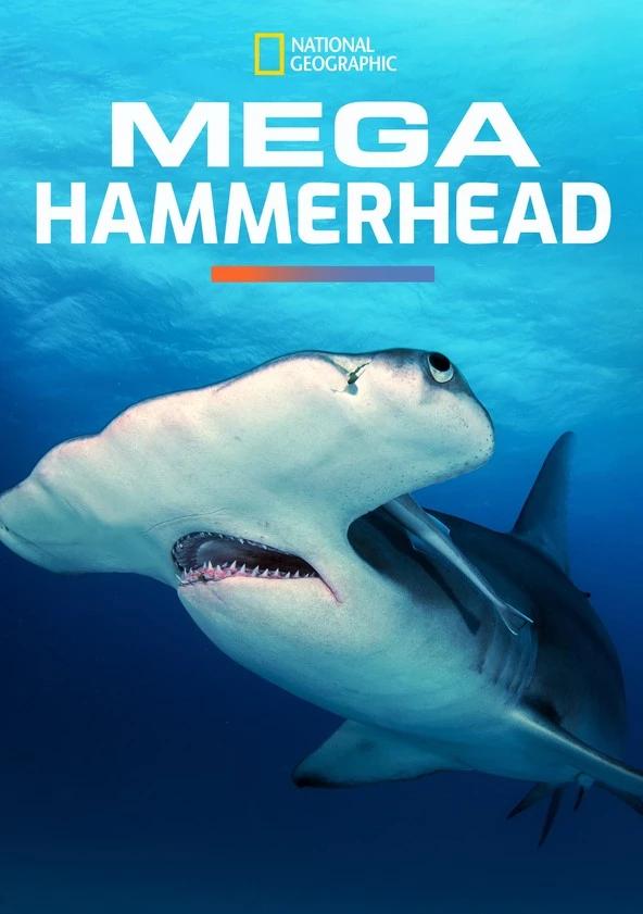 affiche poster mega requin marteau hammerhead disney nat geo