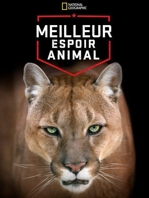 affiche poster meilleur espoir animal animal greatest america disney nat geo