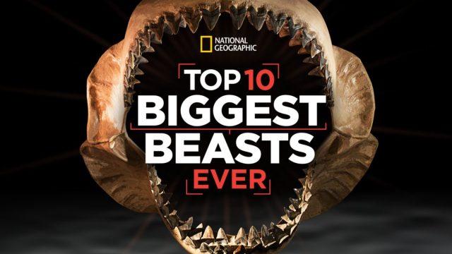 affiche poster monstres jurassique top 10 biggest beasts ever disney nat geo