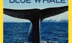 affiche poster royaume baleine bleue kingdom blue whale disney nat geo